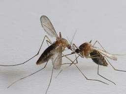 什么方法对治蚊虫叮咬最有效