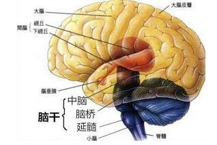 外伤性脑出血药物治疗