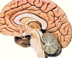 脑缺血灶吃什么药好
