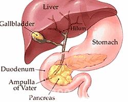 肝昏迷吃啥药