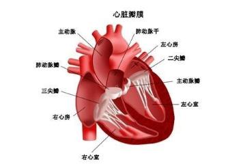 心脏早搏能治愈吗