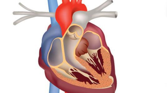 心房纤维性颤动怎样治疗好