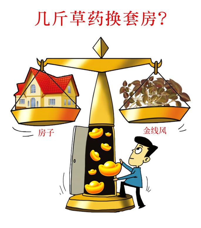 3万元/公斤高价收购,几斤草药换套房不是梦!