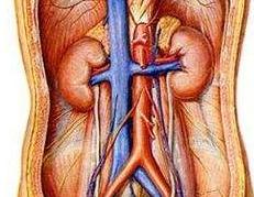 吃什么能让肾精足你知道吗