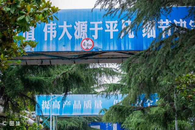"""环保指向标丨鲁南制药厂的雪松喜结""""天鹅蛋"""""""