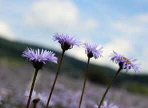 云南省特色植物药分为哪些种